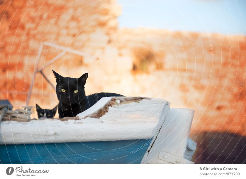 dry sailing Tier Haustier Katze 2 Tierjunges frei schwarze katze Familie & Verwandtschaft Schutz beobachten Neugier Verachtung Farbfoto mehrfarbig Außenaufnahme