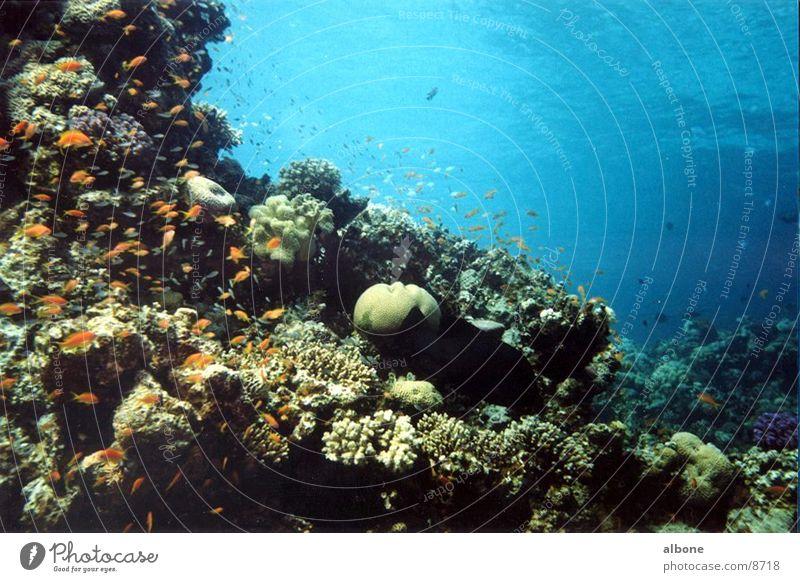 Korallen Wasser Meer Fisch