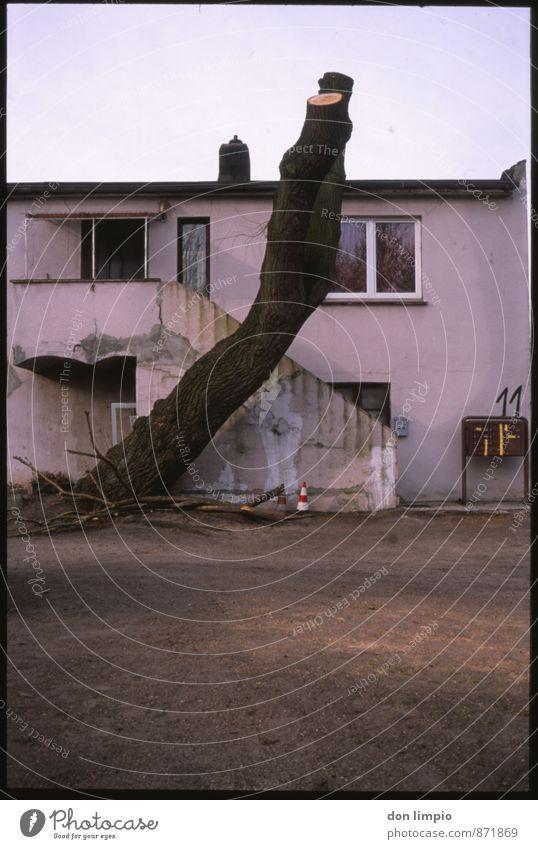 bleiben will ich, wo ich nie gewesen bin Stadt Baum ruhig Haus dunkel kalt Traurigkeit Herbst Stimmung Wohnung Häusliches Leben trist Trauer verfallen