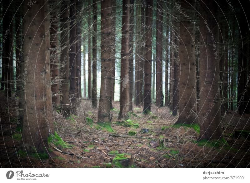 Pflanzenformation Natur Ferien & Urlaub & Reisen Sommer Baum Erholung ruhig Wald Holz braun Deutschland Zufriedenheit authentisch wandern genießen beobachten