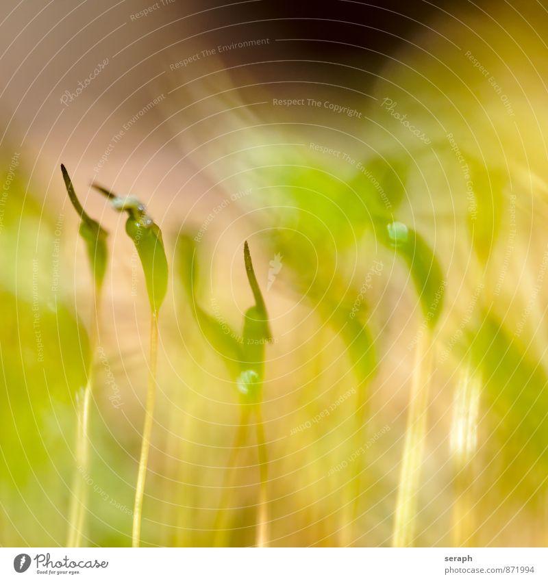 Moose Flechten Pflanze grün Blattgrün weich Sporen Umwelt Mikrofotografie Symbiose Erde Natur geblümt Wachstum Makroaufnahme Biotop üppig (Wuchs) sprießen