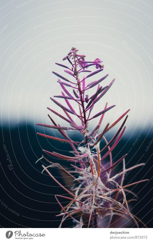 Verblüht Ferien & Urlaub & Reisen Pflanze schön Sommer Freude Umwelt Berge u. Gebirge außergewöhnlich rosa Deutschland Feld Zufriedenheit Sträucher wandern