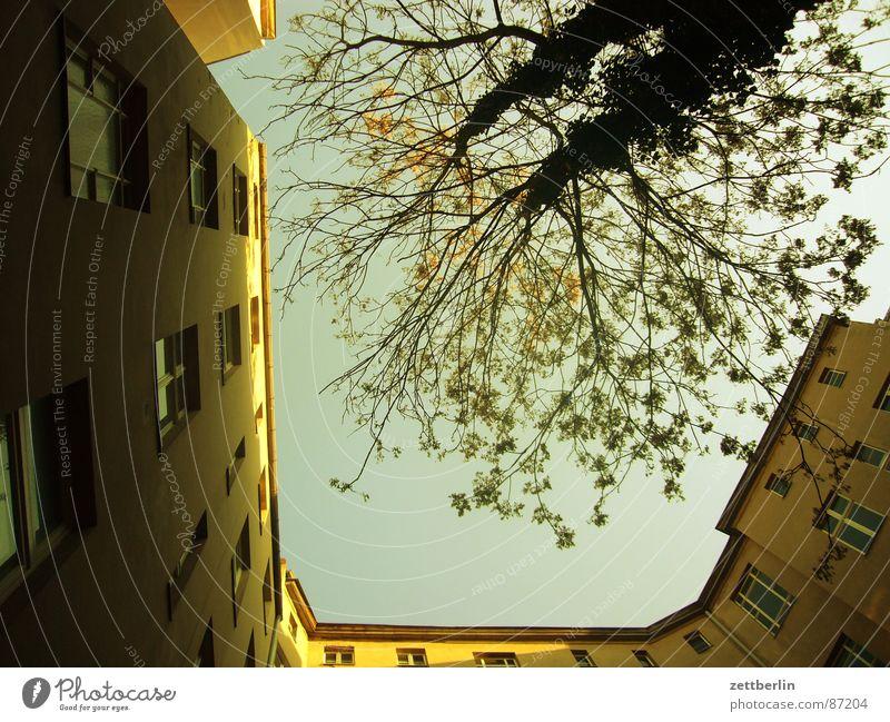 Hofgrün Himmel Haus Fenster Berlin Frühling Gebäude Wohnung Glas Häusliches Leben Bauernhof Reihe Baumstamm Etage Zweig aufwärts Hinterhof