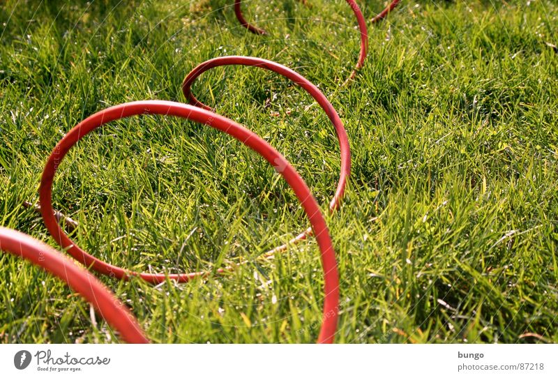 ... rollin', rollin', rollin'! Pflanze Sommer Wiese springen Gras Frühling Garten Linie Elektrizität Kommunizieren Kabel Bodenbelag Verbindung Kurve Halm