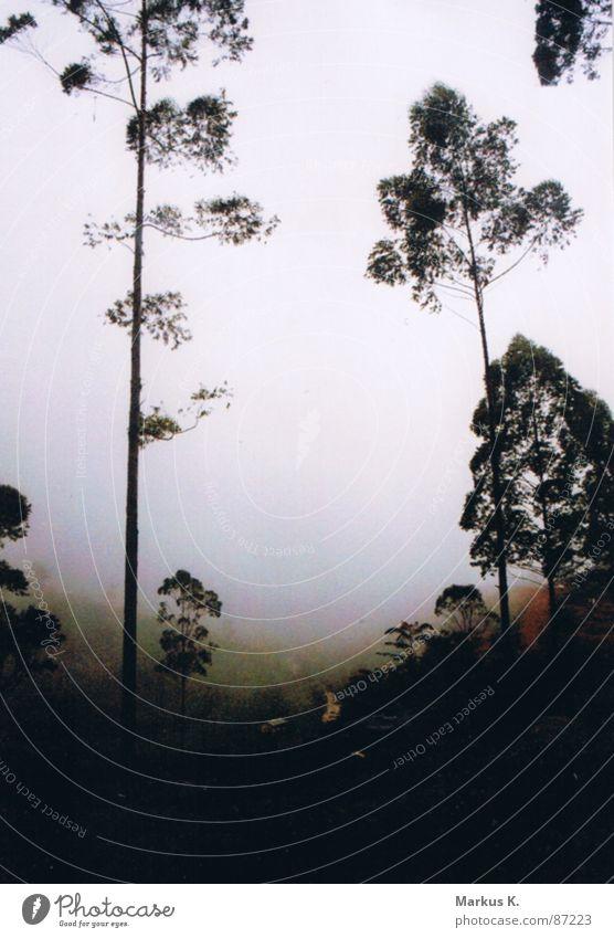 Wanderer im Nebelmeer Einsamkeit Ferne Wald dunkel Gefühle Berge u. Gebirge Traurigkeit Wege & Pfade Regen Angst Trauer Romantik feucht Baumstamm Sorge