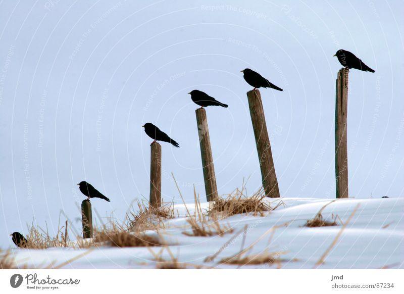 Mittagspause Winter Tier Schnee Erholung Gras Holz Vogel sitzen Ordnung mehrere Pause stehen Feder Gesellschaft (Soziologie) Anordnung Haushuhn