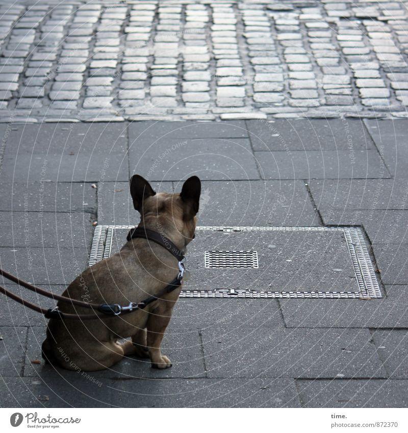 grau ist zuweilen die Straße Verkehr Verkehrswege Personenverkehr Wege & Pfade Bürgersteig Gully Kopfsteinpflaster Pflastersteine Bodenplatten Tier Haustier