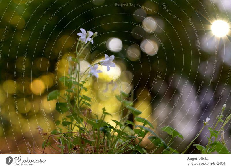 mit Sonnenschein... Pflanze Sommer Erholung Blüte Stimmung