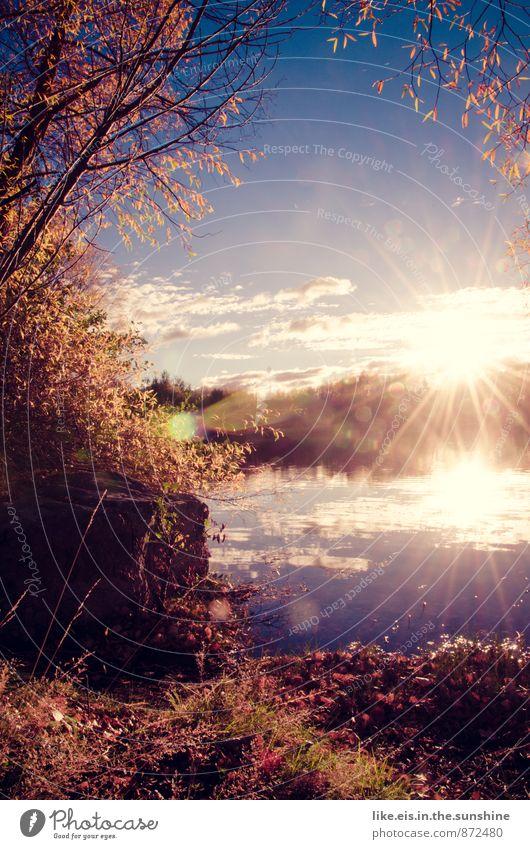 herbst-romanze Natur Landschaft Blatt Umwelt Herbst