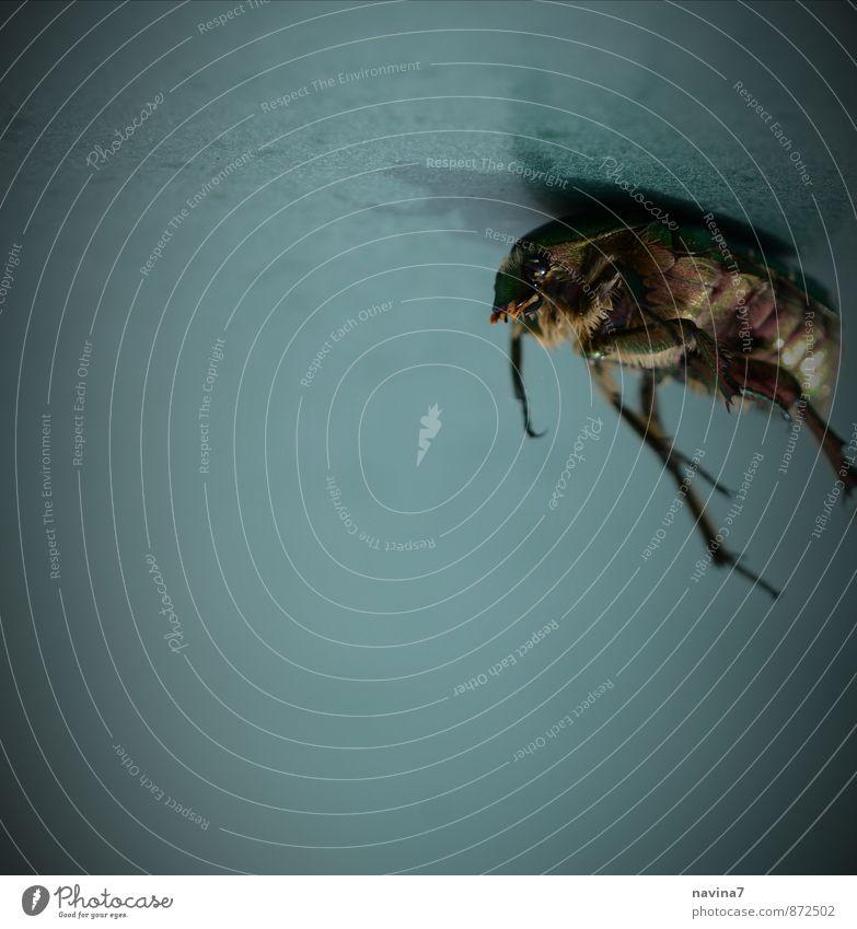 Käferleiche blau grün Tier Tod oben Horizont liegen trist Wildtier kaputt Trauer Ziel Glaube Höhenangst Flugangst Stress