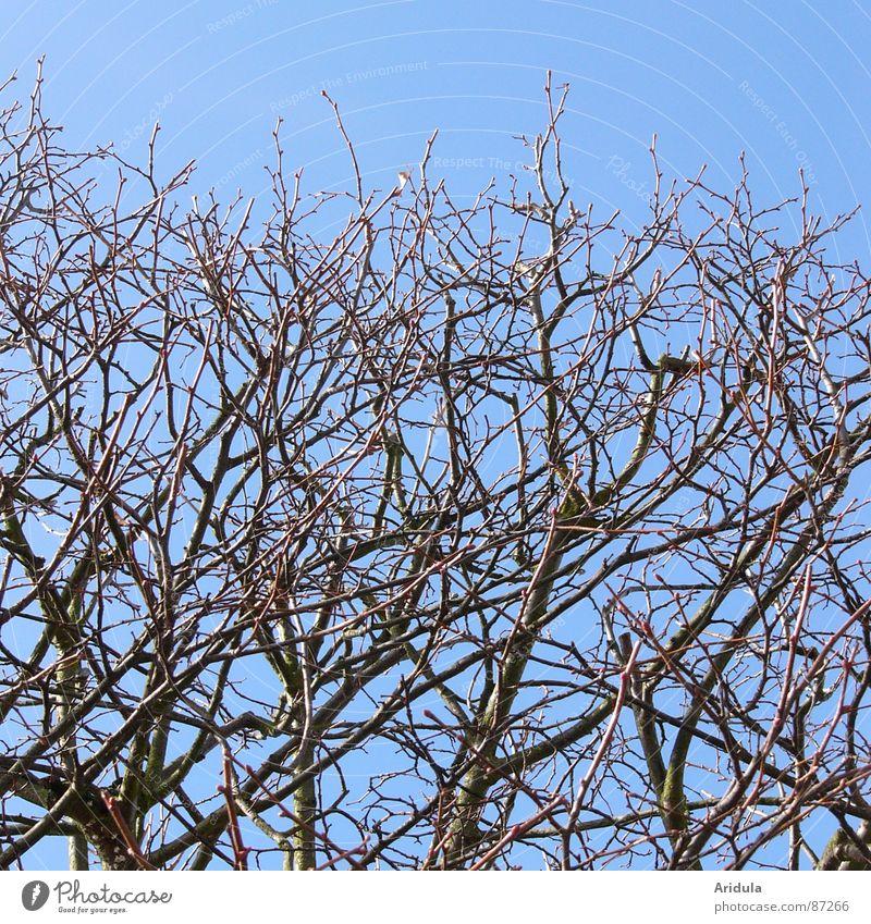 zweige auf blau Natur Himmel Baum blau Frühling Luftverkehr Ast Zweig geschnitten Geäst