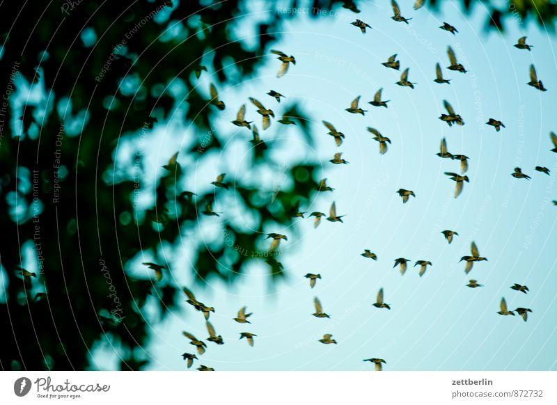 Ausflug Himmel Natur Ferien & Urlaub & Reisen Stadt Pflanze Sommer Baum Haus Tier Umwelt Bewegung Gebäude Berlin Menschengruppe fliegen Vogel