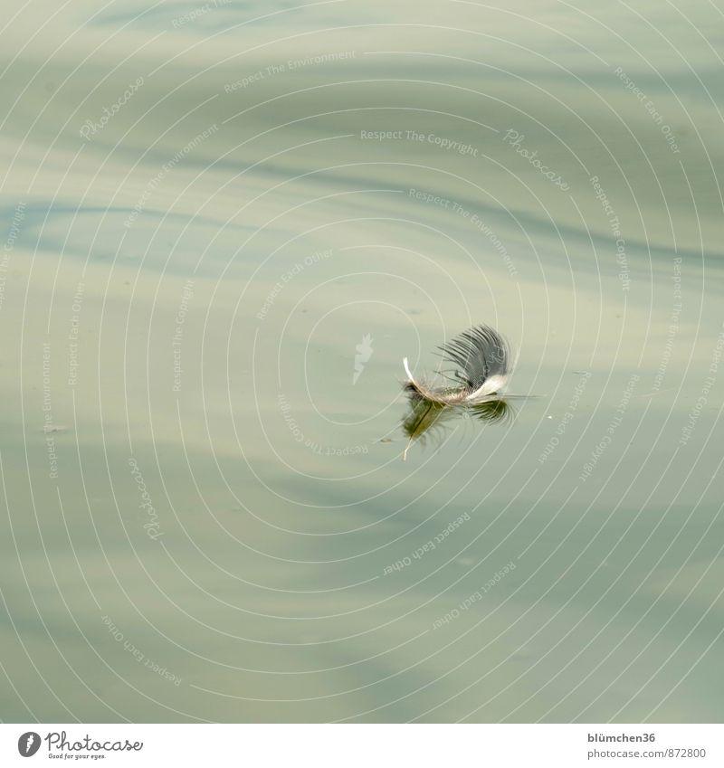 nur fliegen ist schöner... Wasser See Wellen Vogel Feder Schwimmen & Baden ästhetisch Schweben sanft Frieden friedlich Leichtigkeit Im Wasser treiben verloren