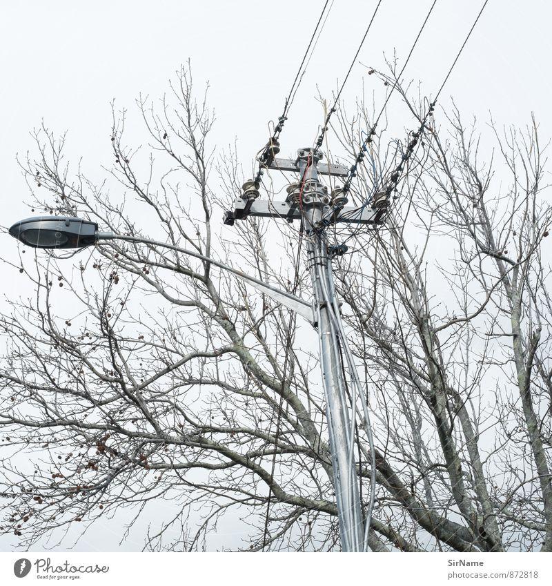 278 [intersection] Energiewirtschaft Telekommunikation sprechen Kabel Fortschritt Zukunft Informationstechnologie Energiekrise Natur Baum Laternenpfahl