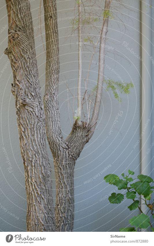 276 [im Garten] Natur Pflanze Sommer Baum Blatt Wand Mauer Stil Holz Freizeit & Hobby Wohnung Ordnung Wachstum Design Perspektive