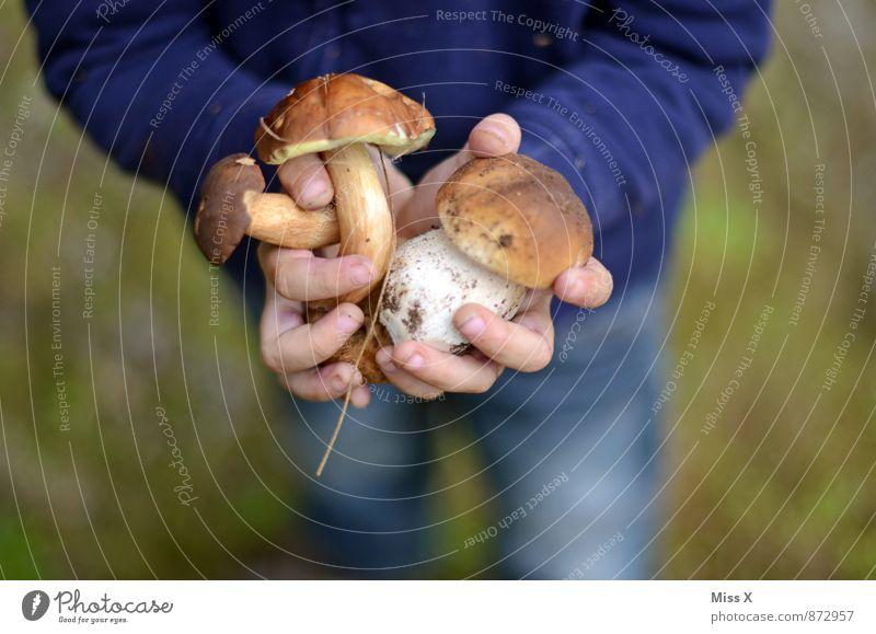 Fleißig Mensch Kind Hand Wald Gesunde Ernährung Herbst Lebensmittel Freizeit & Hobby Kindheit frisch Ernährung Finger Suche 8-13 Jahre lecker Bioprodukte