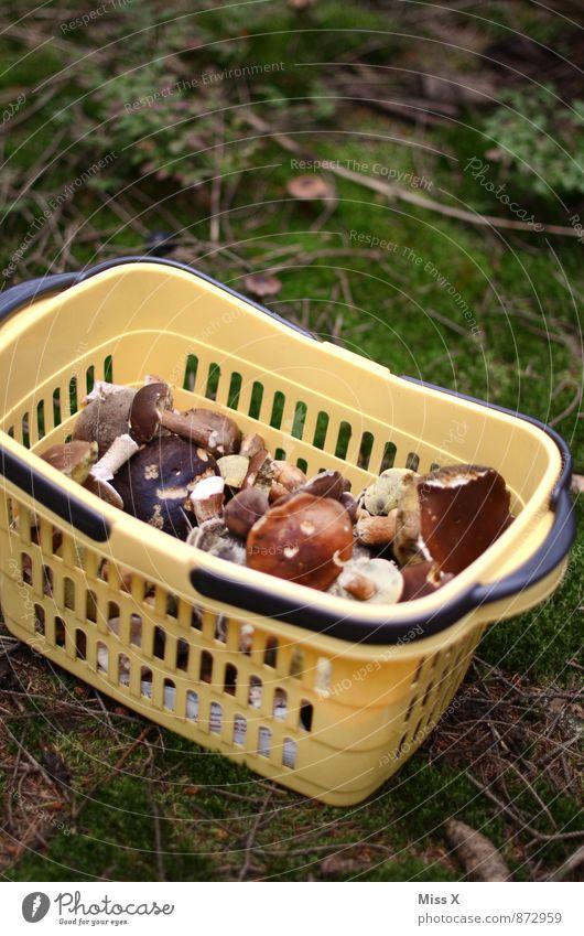 Pilzkorb Lebensmittel Ernährung Vegetarische Ernährung Freizeit & Hobby Umwelt Natur Herbst Moos Wald dreckig frisch lecker Korb Pilzsucher Maronenröhrling
