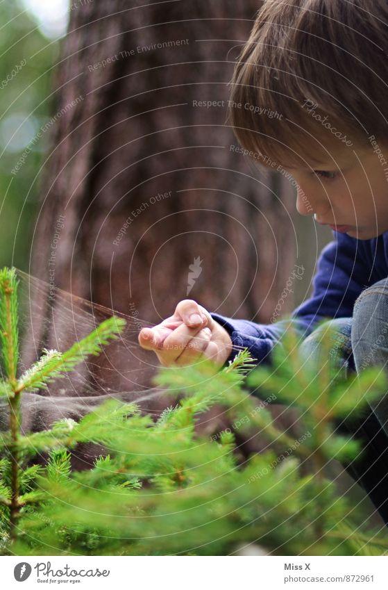 Spinnwebe Mensch Kind Natur Baum Tier Wald kalt Gefühle Junge Stimmung Regen Kindheit Wassertropfen nass Finger Abenteuer