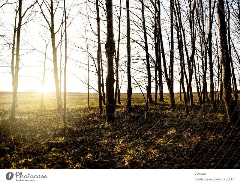 feierabend Leben Sommer Sonne Umwelt Natur Landschaft Sonnenaufgang Sonnenuntergang Schönes Wetter Wärme Blume Gras Moos Wiese ästhetisch Gesundheit nachhaltig