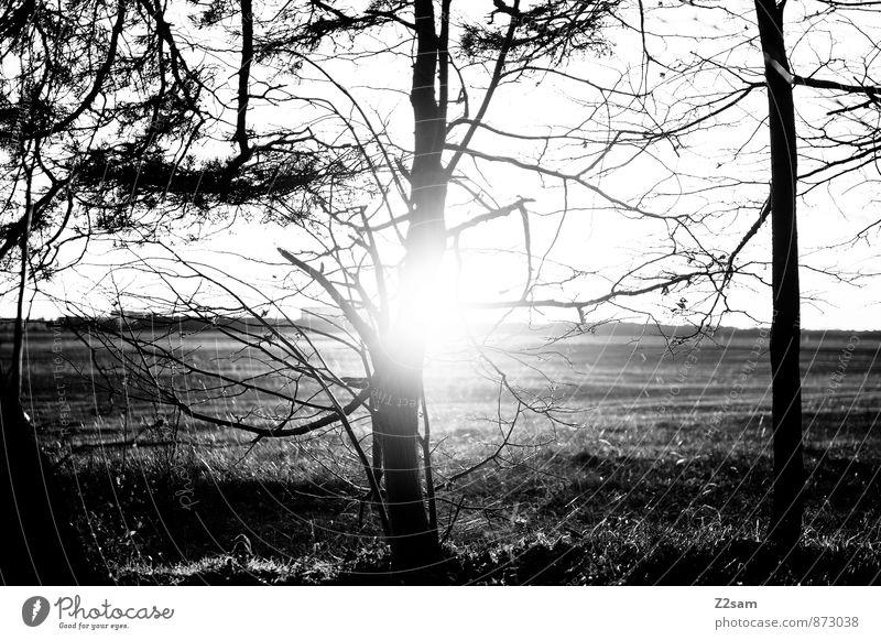 Sonntagnachmittag Leben Umwelt Natur Landschaft Herbst Schönes Wetter Pflanze Baum Sträucher Feld Wald dunkel nachhaltig natürlich trist ruhig ästhetisch