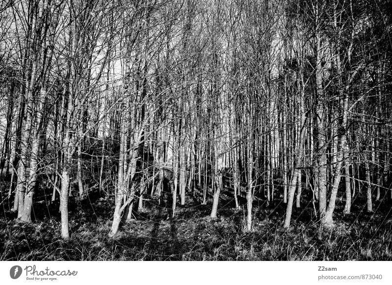 Hacklholz Natur Baum Einsamkeit Erholung Landschaft dunkel Wald Umwelt Stimmung Ordnung trist Idylle Sträucher Energie ästhetisch Schönes Wetter