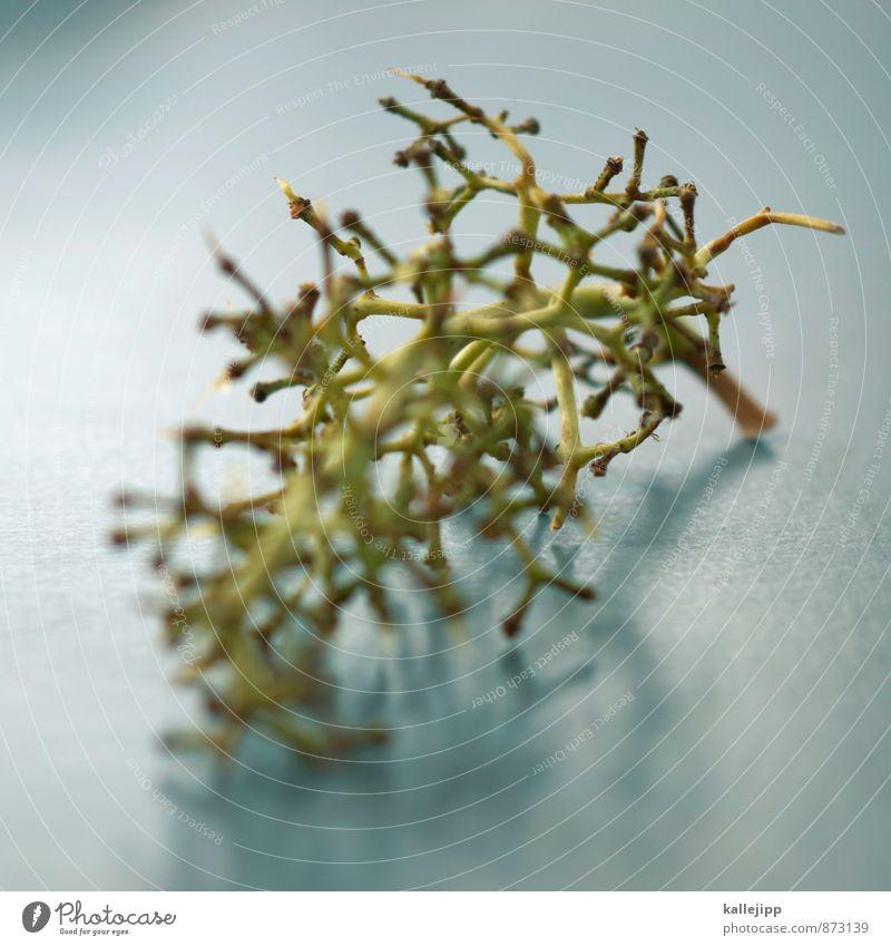 veggy-day Lebensmittel Frucht Ernährung Essen Bioprodukte Umwelt Natur Pflanze ästhetisch Weintrauben Stengel Rest ausdruckslos lecker Ernte Weinlese schön