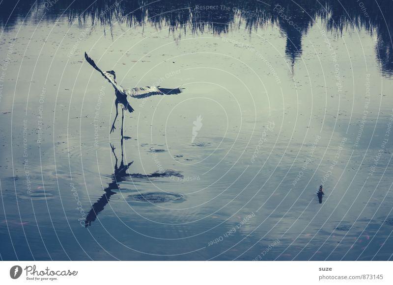 Fliegen | rääädi tu goooh elegant Umwelt Natur Landschaft Tier Wasser Teich See Wildtier Vogel Flügel Bewegung fliegen fantastisch natürlich wild blau Reiher
