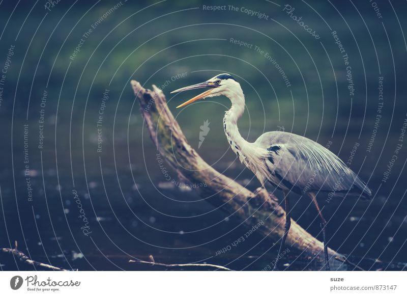 Herr Strese mit Schnappatmung Natur blau Wasser Landschaft Tier Umwelt grau See Vogel wild elegant Wildtier stehen warten Feder ästhetisch