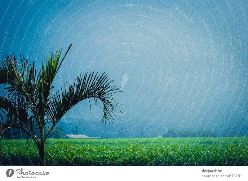 Endlich Regen Natur Ferien & Urlaub & Reisen blau Pflanze grün weiß Wasser Sommer Baum ruhig Umwelt Regen Feld genießen beobachten fantastisch