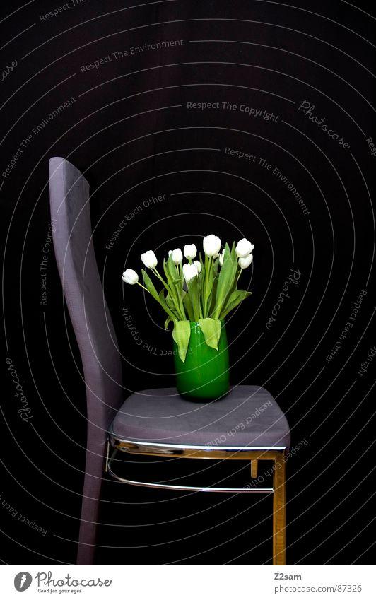 test grün Blume schwarz sitzen stehen Stuhl einfach Dinge violett Versuch Neigung Vase Verlauf Behälter u. Gefäße Samt Blumenvase