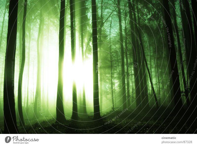 Mystic Natur Pflanze Sonne Blatt Einsamkeit Wald Umwelt Luft Erde Bodenbelag Sträucher Ast Idylle Baumstamm mystisch Baum