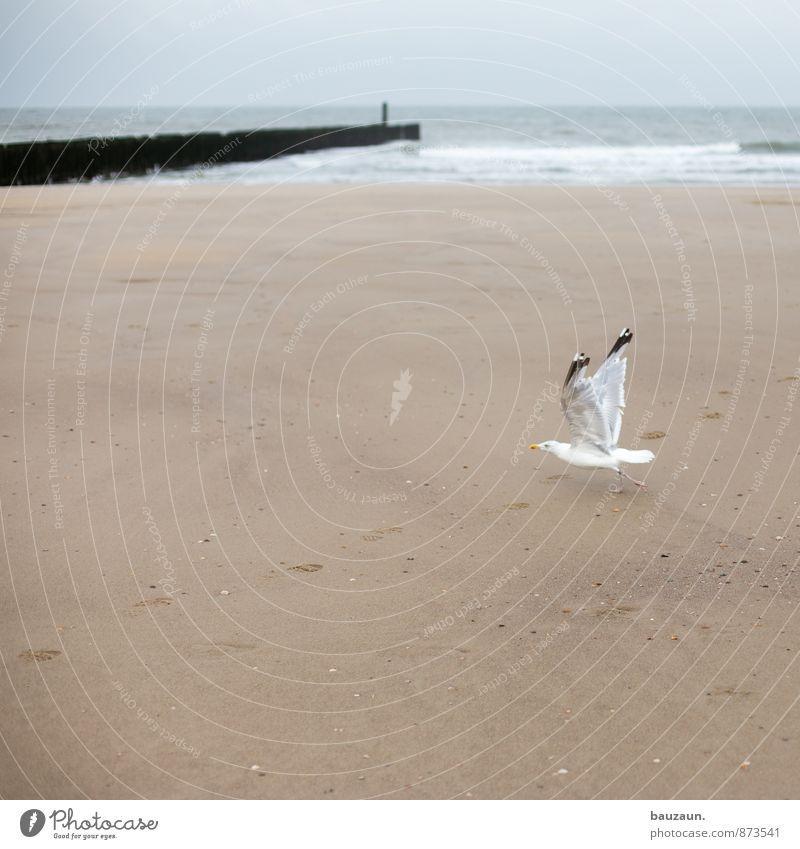 starten. Himmel Natur Ferien & Urlaub & Reisen Sommer Meer Wolken Tier Strand Ferne Umwelt Bewegung Küste Freiheit Sand fliegen Vogel