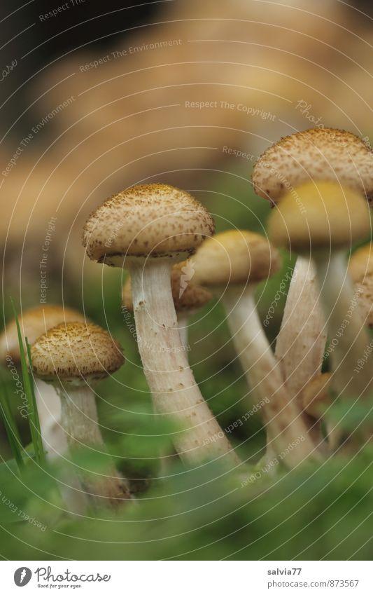 Pilzgruppe Natur Pflanze grün Sommer Wald Umwelt Herbst natürlich braun Wachstum Erde stehen genießen Vergänglichkeit weich Wandel & Veränderung