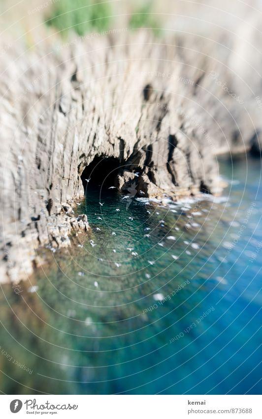 Schwarm Umwelt Natur Landschaft Wasser Sonnenlicht Sommer Schönes Wetter Wärme Felsen Wellen Küste Bucht Meer Höhleneingang Mittelmeer Italien Ligurien Vogel