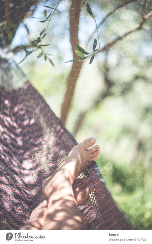 Ein guter Platz Lifestyle Ferien & Urlaub & Reisen Camping Sommer Sommerurlaub Sonne Sonnenbad Leben Fuß Zehen 1 Mensch Blatt Grünpflanze Olivenhain Olivenbaum
