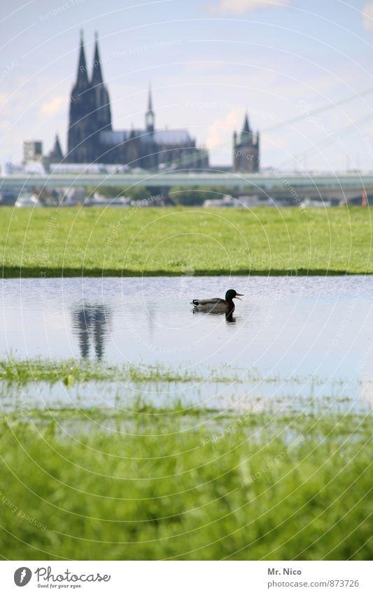Kölner Zoo Himmel Stadt grün Wasser Landschaft Tier Umwelt Wiese Gras Architektur See Park Klima Schönes Wetter Kirche Brücke