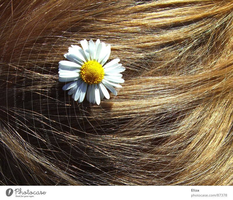 Blonde Haare mit einem Gänseblümchen Sonne Sommer blond Verzierung Frisur Hochzeit Blume blumig Hippie romantisch Blüte Haare & Frisuren verspielt sommerlich