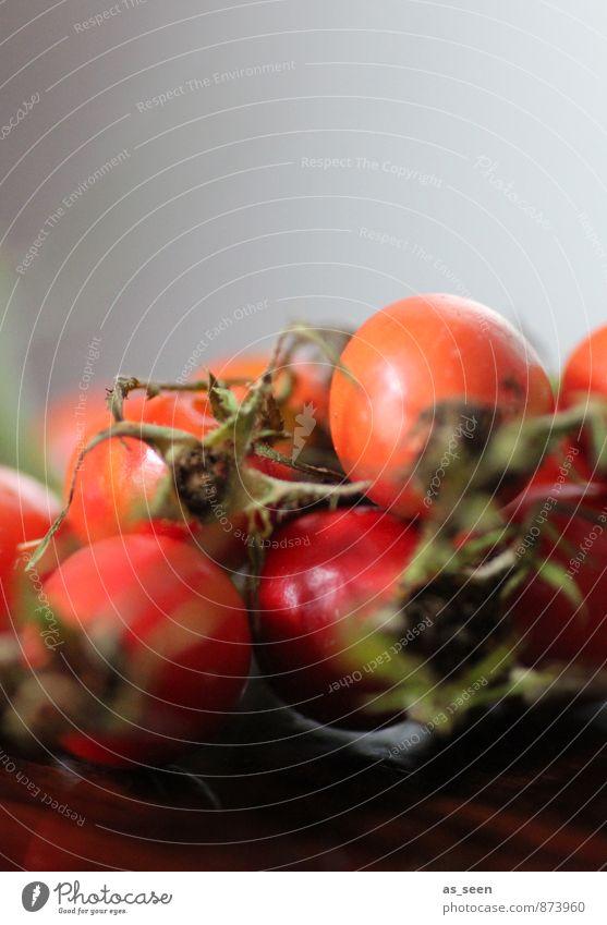 Hagebutten Natur Pflanze grün rot Blüte Herbst natürlich Gesundheit Frucht orange Park glänzend Dekoration & Verzierung ästhetisch einfach Vergänglichkeit