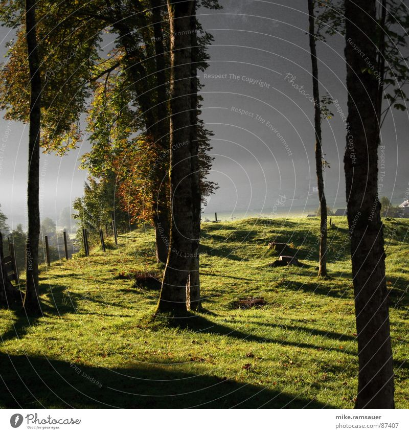 Vor lauter Bäumen grün Blatt Wald dunkel Wiese Zaun Tau Stab