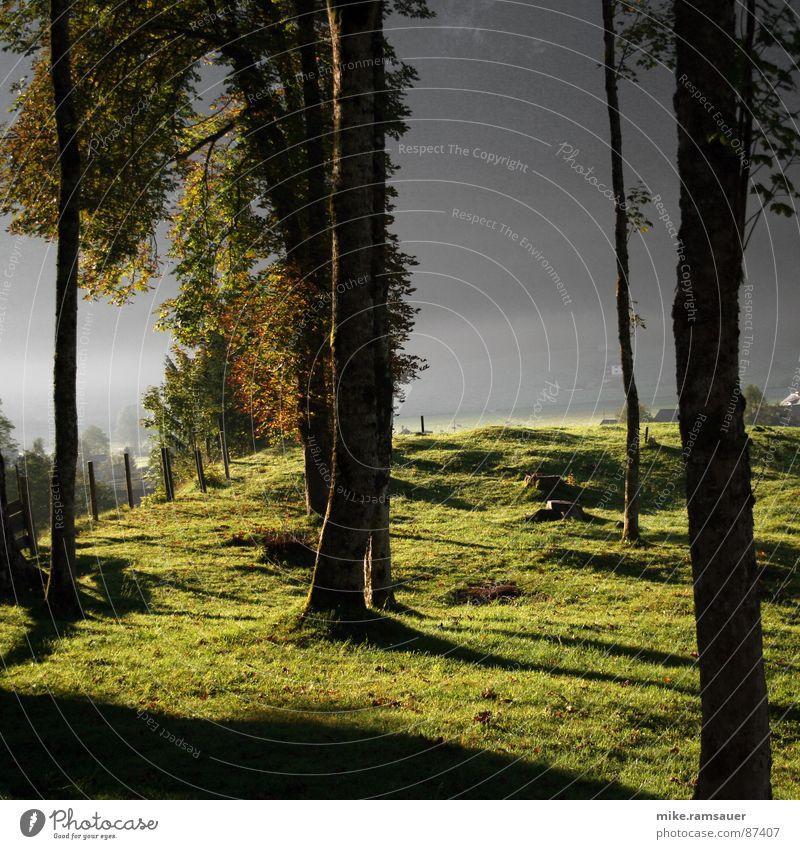 Vor lauter Bäumen Wiese Tau Blatt grün Wald dunkel Sonnenaufgang Stab Zaun Schatten