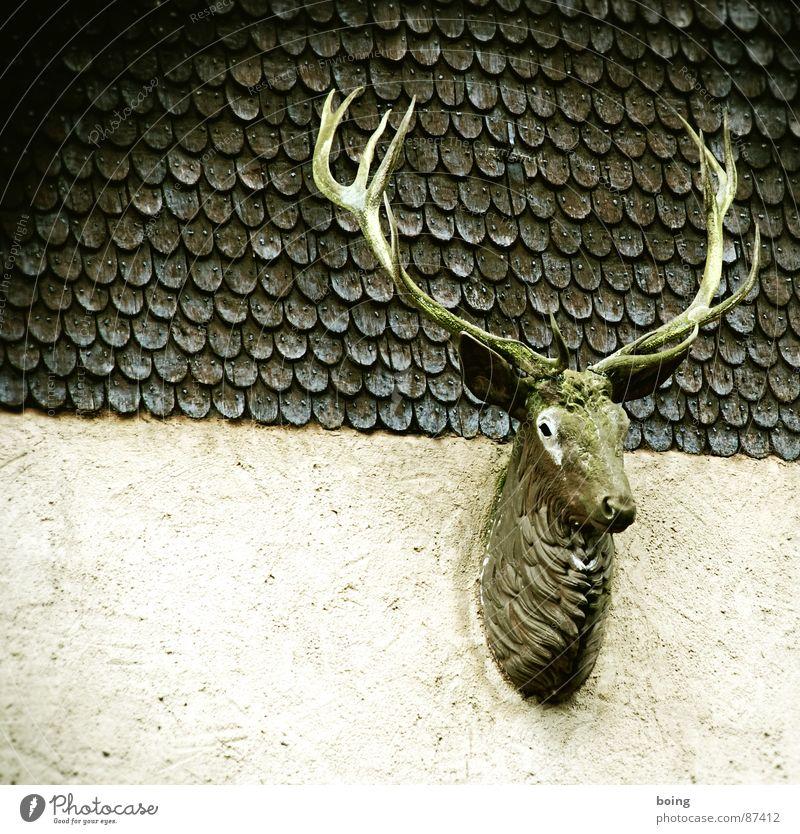 Rudi: hello my deer Brunft Palais Kesselstadt Jagd Zwölfender Pirsch Horn Hirsche Trophäe Bock Jäger Reh Wildtier wild Wildfleisch Wildfang Burg oder Schloss