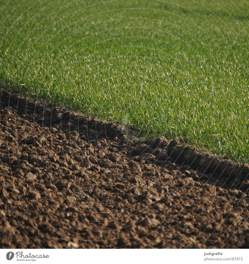 Acker Feld Wachstum Landwirtschaft grün braun pflügen Frühling Ackerbau Auftrag Erde Wiese Bodenbelag anbauen Linie bauerngut Humus wachsen lassen mutterboden