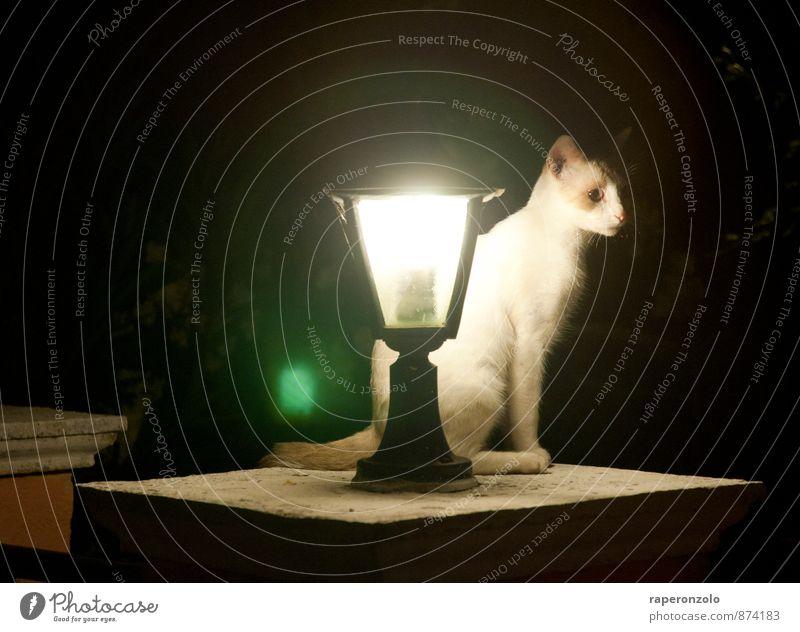 lonesome tonight Katze weiß Einsamkeit Tier schwarz dunkel Beleuchtung leuchten sitzen warten beobachten Straßenbeleuchtung Wachsamkeit Haustier Jagd Hauskatze