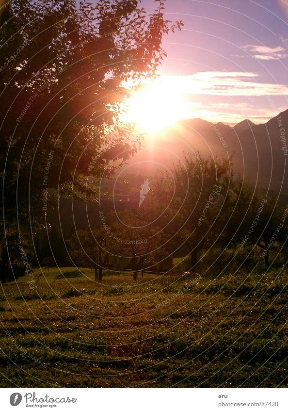 Abendrot in den Bergen Himmel Baum Sonne Berge u. Gebirge Romantik Alpen