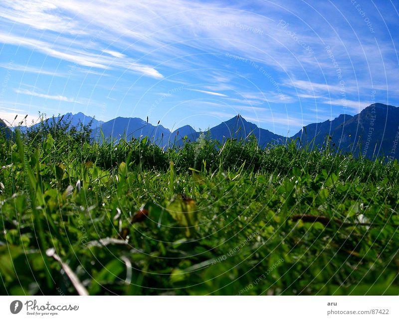 Im Gras Ferien & Urlaub & Reisen Wiese grün Berge u. Gebirge Blick Himmel Alpen