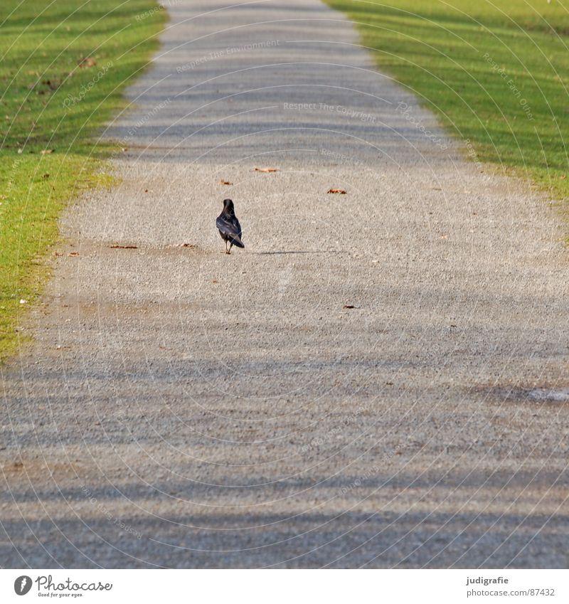 Spaziergang Sonne grün Einsamkeit Wiese Gras Frühling Garten Wege & Pfade Park Vogel gehen laufen Rasen Tier Krähe
