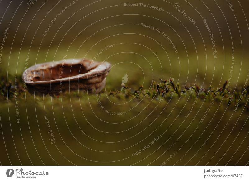 Nussschale auf Moos grün Wasserfahrzeug Umwelt Makroaufnahme Nahaufnahme Walnuss Schalen & Schüsseln Natur liegen