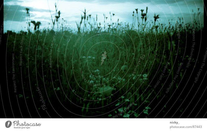nostalgische kittykat view Himmel grün schwarz Herbst Wiese Gras Landschaft Weide Stillleben Halm Nostalgie Am Rand beige Scan negativ