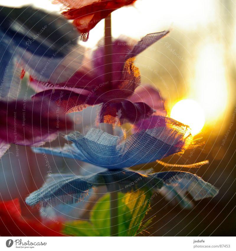 °Summerfeeling° Freude Zufriedenheit Ferien & Urlaub & Reisen Freiheit Sommer Sonne Dekoration & Verzierung Frühling Blume Blüte Stoff Kunststoff kaputt gelb
