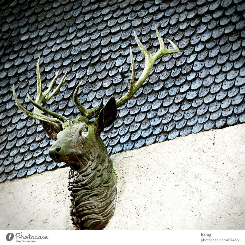 Ralf: ? Kunst Wildtier wild Wildfleisch Burg oder Schloss Zoo Jagd Horn Hirsche Jäger Reh Horn Moral Kunsthandwerk Brunft Trophäe